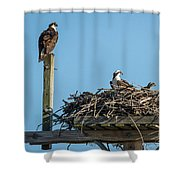 Osprey Family 8283 Shower Curtain