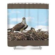 Osprey Family Shower Curtain