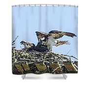 Osprey Family Portrait No. 1 Shower Curtain