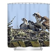 Osprey Family Portrait No. 2 Shower Curtain