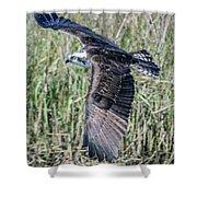 Osprey Flying  Shower Curtain