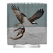 Osprey Flying With Seaweed Shower Curtain