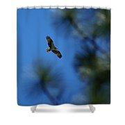 Osprey In Flight 8 Shower Curtain