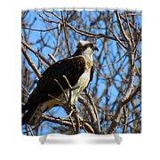 Osprey In Spring Shower Curtain