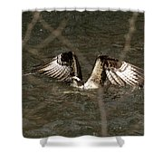 Osprey In The Creek Shower Curtain