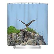 Osprey Landing On A Nest Shower Curtain