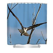 Osprey Launches Head On Shower Curtain