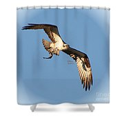 Osprey Natures Way  Shower Curtain