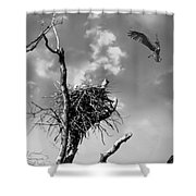 Osprey Nest Shower Curtain