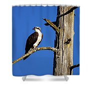 Osprey Nest Guard - 001 Shower Curtain