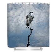 Osprey On Top Of The World Shower Curtain