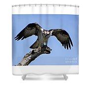Osprey Power Shower Curtain