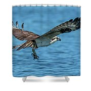 Osprey Ready For Fish Shower Curtain