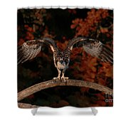 Osprey Ready For Take Off Shower Curtain