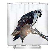 Osprey Silhouette Shower Curtain