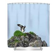 Osprey Sitting On A Ledge In Casco Bay  Shower Curtain