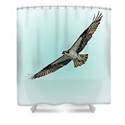 Osprey Soar 2 Shower Curtain