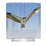 Osprey Soar Search Shower Curtain