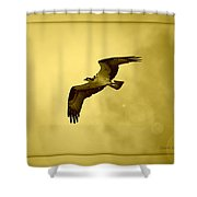 Osprey Soaring Into Golden Sunlight Shower Curtain