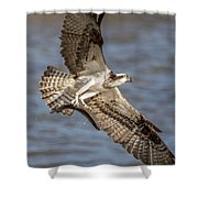 Osprey Take-out Shower Curtain