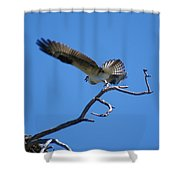 Osprey Takeoff Shower Curtain