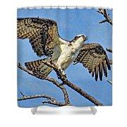Osprey Wing Stretch Shower Curtain