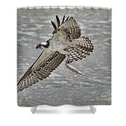 Osprey With Breakfast Shower Curtain