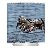 Osprey With Catch 9108 Shower Curtain