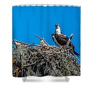 Osprey With Chicks Shower Curtain