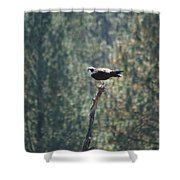 Osprey With Fish 2 Shower Curtain