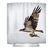 Osprey With Fish 8138 Shower Curtain