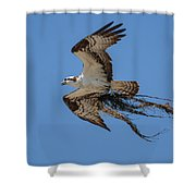 Osprey With Nesting Material 031620161559 Shower Curtain