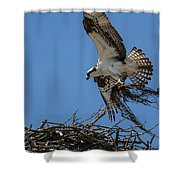 Osprey With Nesting Material 031620161567 Shower Curtain