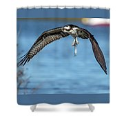Osprey With Pin Fish Shower Curtain