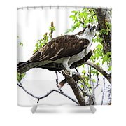 Osprey With Snack Shower Curtain