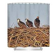 Osprey Young Shower Curtain