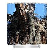Ospreys In Spanish Moss Nest Shower Curtain
