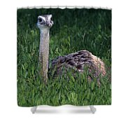 Ostrich Chick Shower Curtain