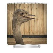 Ostrich Shower Curtain