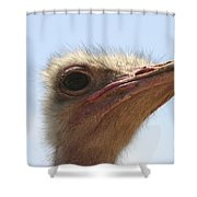 Ostrich Head Close Up Shower Curtain