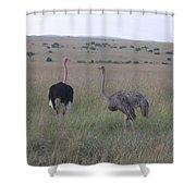 Ostrich Love Shower Curtain