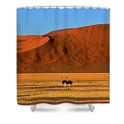 Ostriches At Sossusvlei Shower Curtain