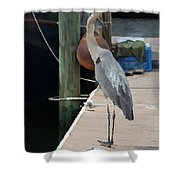 Otis..dock Of The Bay Shower Curtain