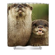 Otter And Cub Shower Curtain