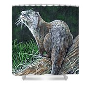 Otter On Branch Shower Curtain