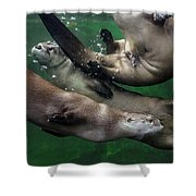 Otter Traffic Jam Shower Curtain