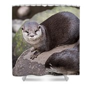 Otters In Arms Shower Curtain