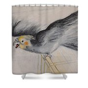 our cockatiel  Coco Shower Curtain