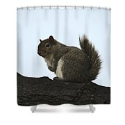 Our Squirrel Chubby Shower Curtain