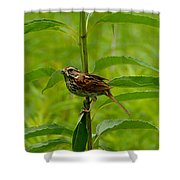 Out For Lunch Shower Curtain